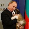 Владимир Путин и его собаки (15 фото)